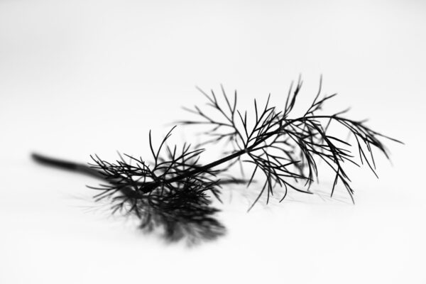 Black and white dill