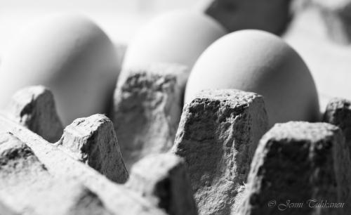 097 Eggs