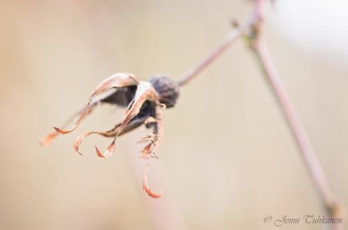 065 Dead flower